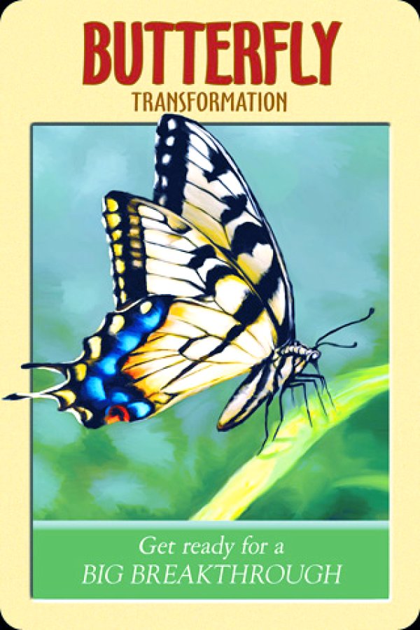 Butterfly ~ Transformation, from the Power Animals Oracle Card deck, by Stephen D Farmer
