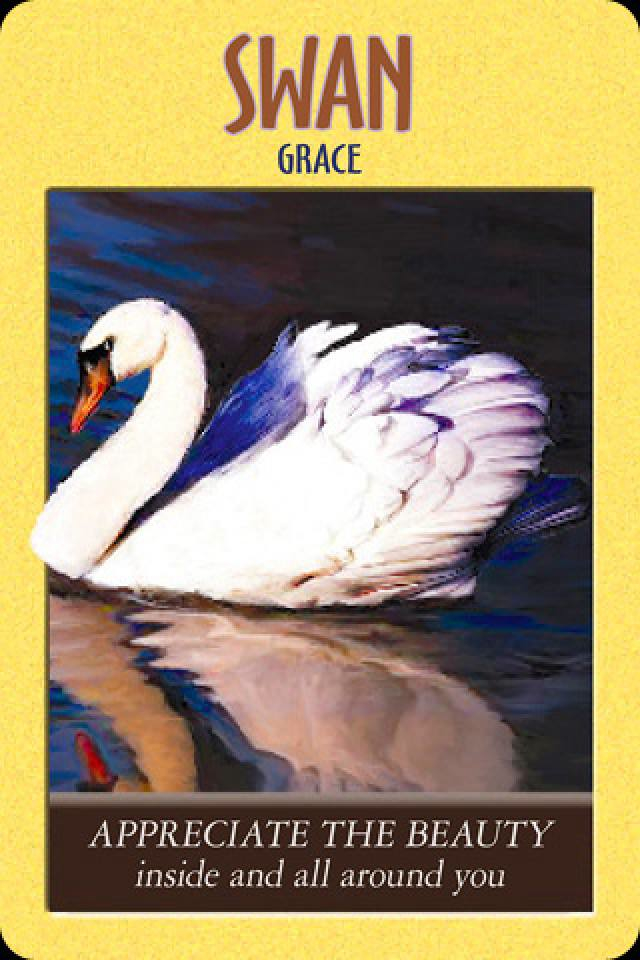 Swan ~ Grace, from the Power Animal Oracle Card deck, by Stephen D Farmer