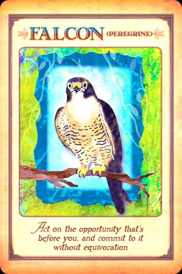 Falcon, from the Messages From Your Animal Spirit Guides Oracle Card deck, by Stephen D Farmer