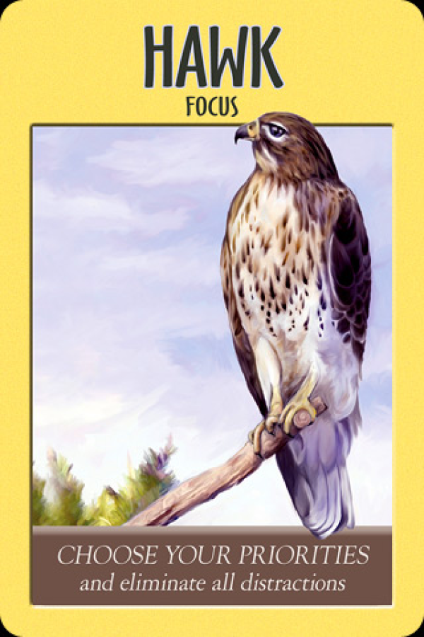Hawk ~ Focus, from the Power Animal Oracle Card deck, by Stephen D Farmer