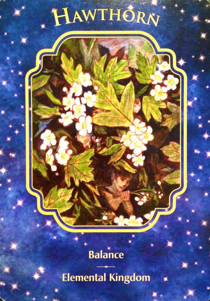 Hawthorn, from the Angel Dreams Oracle Card deck, by Doreen Virtue, Ph.D and Melissa Virtue