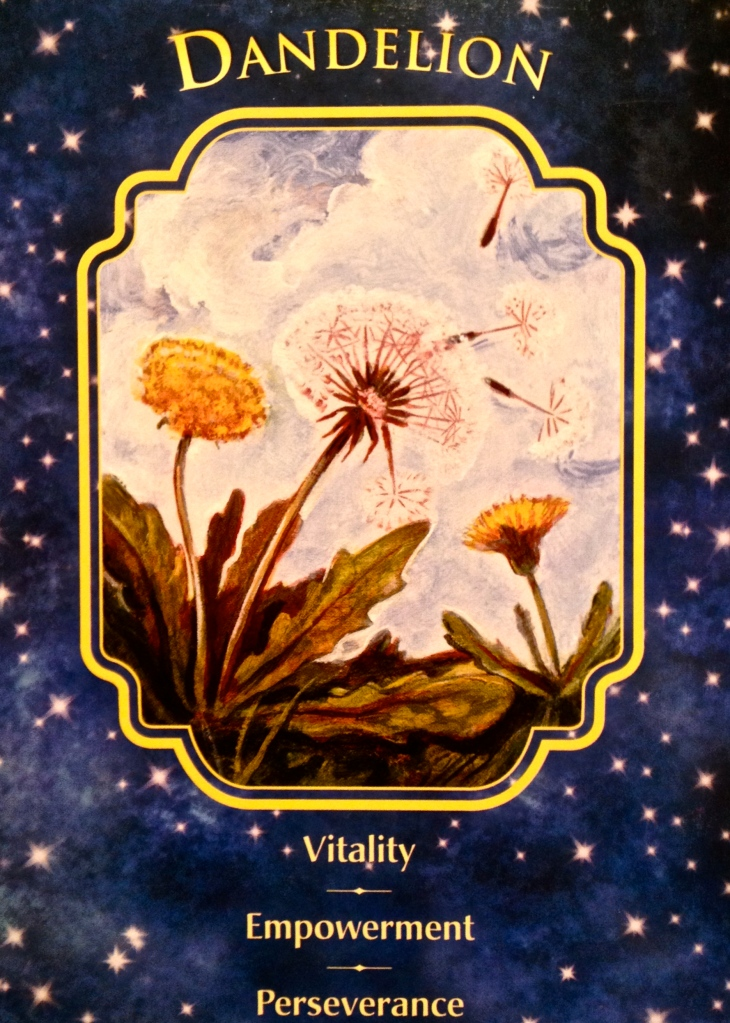 Dandelion, from the Angel Dreams Oracle Card deck, by Doreen Virtue, Ph.D and Melissa Virtue