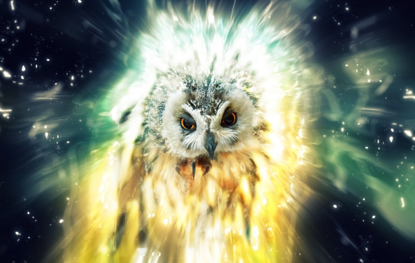 cosmic owl daubphoto - photo #10
