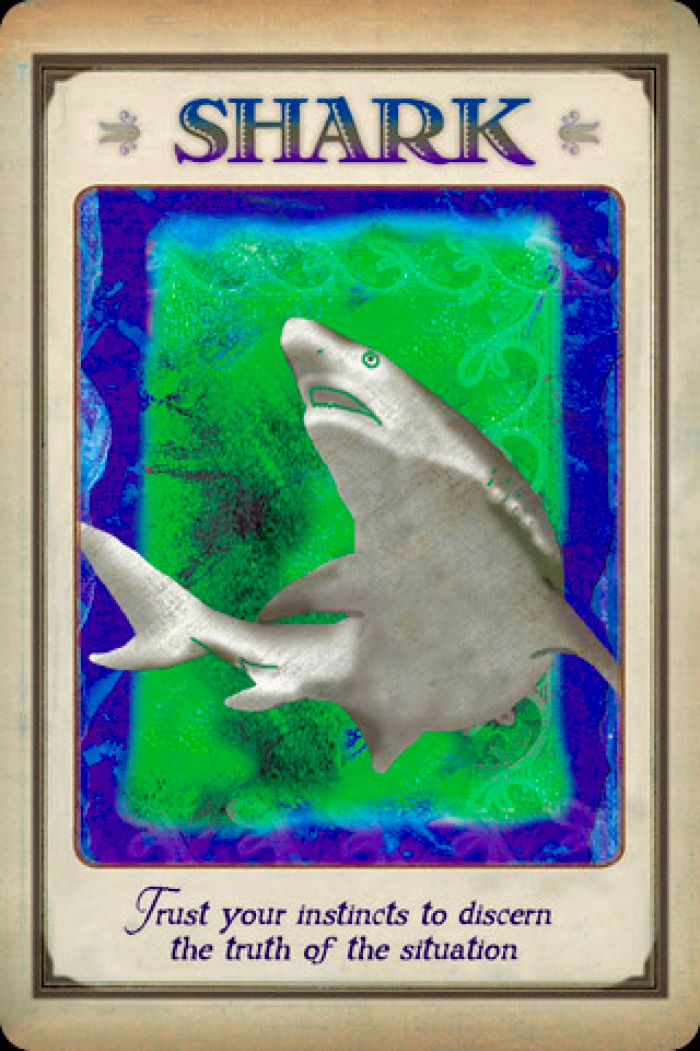 Shark, from the Messages From Your Animal Spirit Guides, by Stephen D Farmer