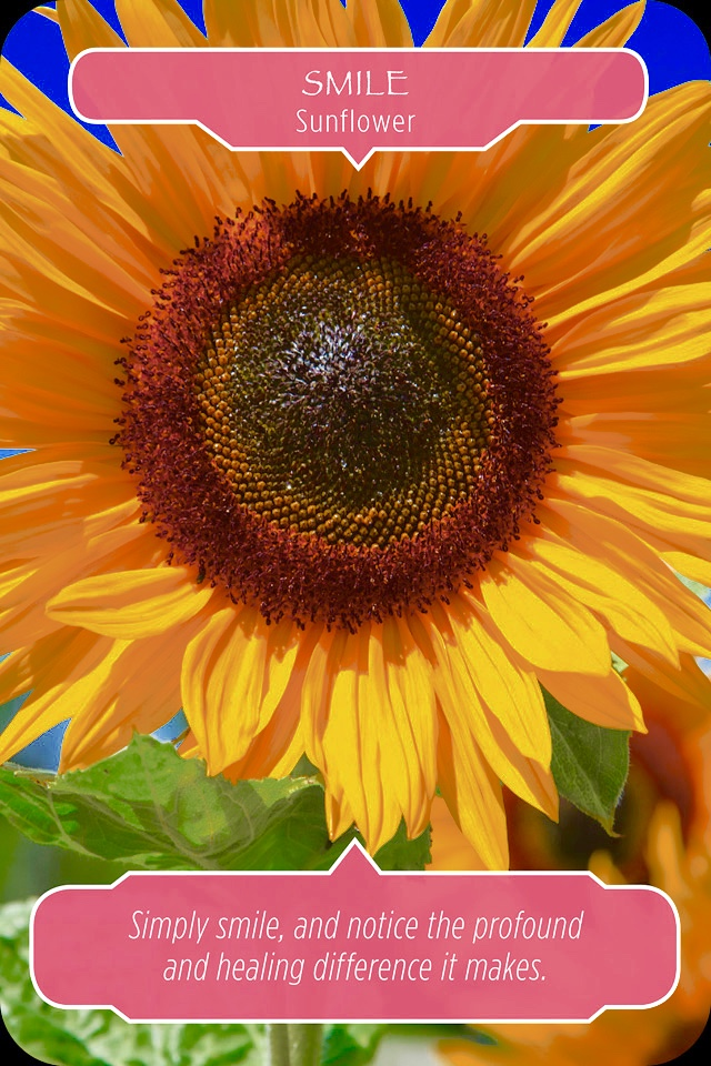 Sunflower ~ Smile, from the Flower Therapy Oracle Card deck, by Doreen Virtue Ph.D and Robert Reeves