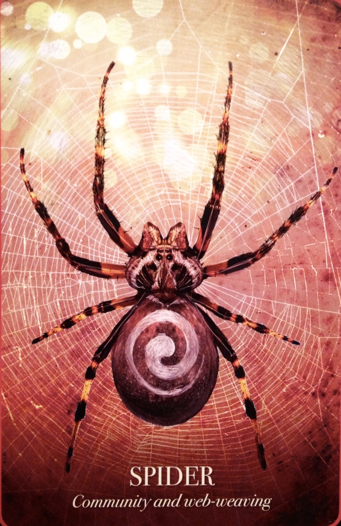 Spider ~ Community and Web-Weaving, from the Halloween Oracle Card deck, by Stacey Demarco
