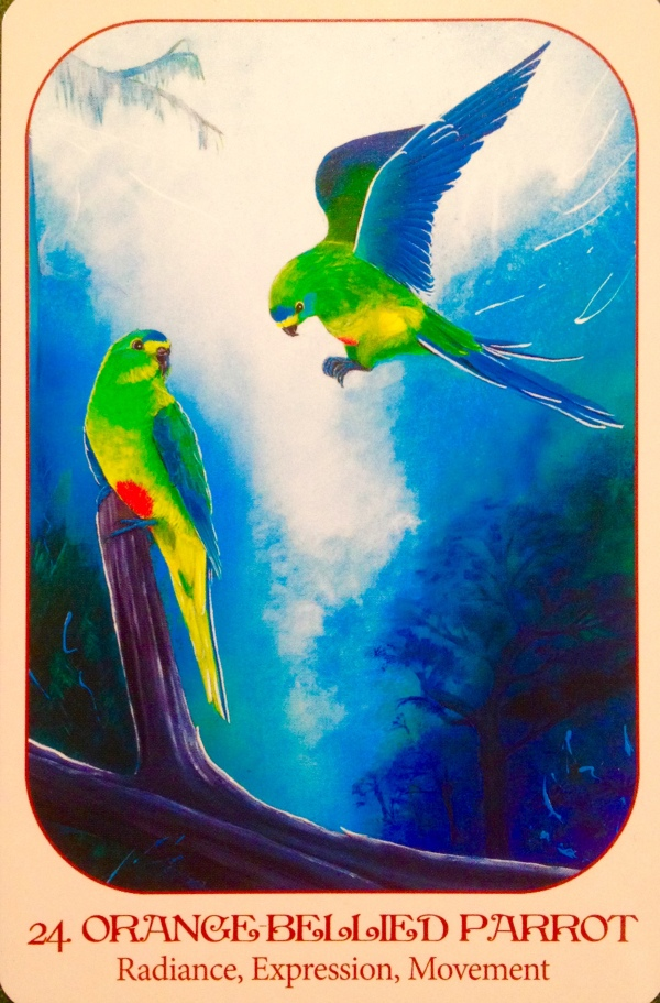 Orange Bellied Parrot, from the Animal Voices Oracle Card deck, by Chip Richards