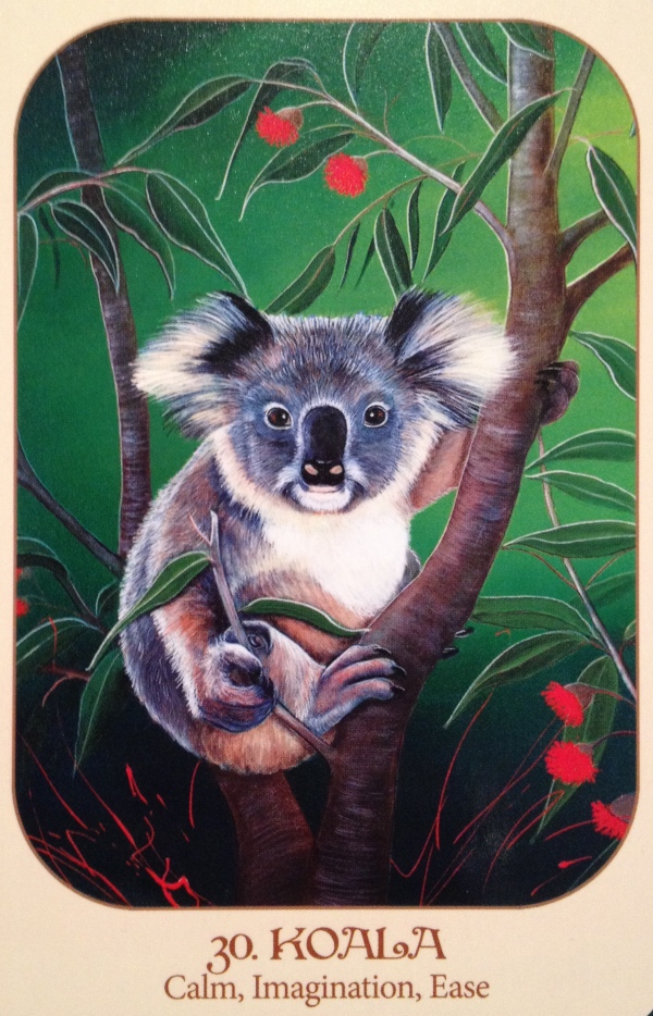 Koala, from the Animal Voices Oracle Card deck, by Chip Richards