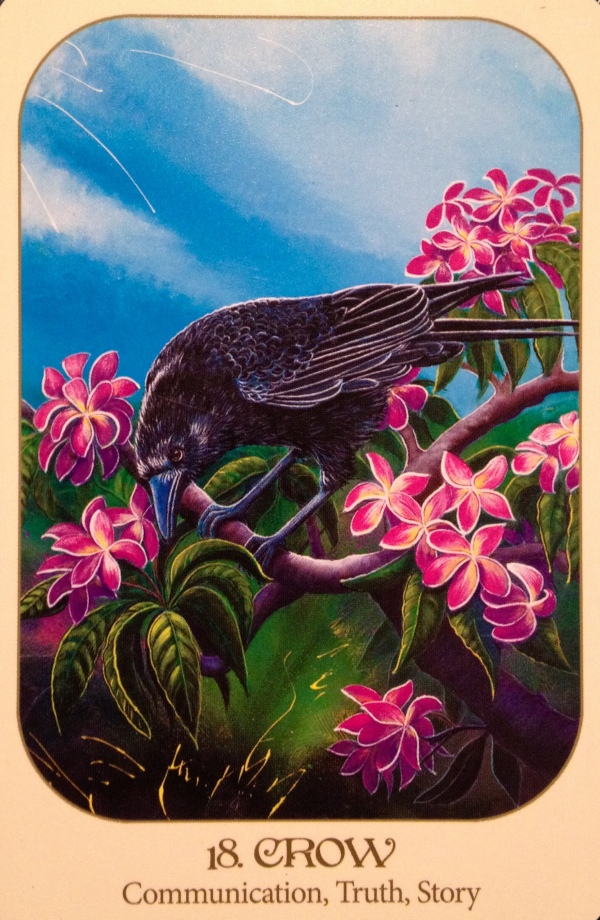 Crow, from the Animal Voices Oracle Card deck, by Chip Richards