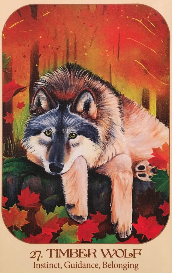 Timber Wolf, from the Animal Voices Oracle Card deck, by Chip Richards