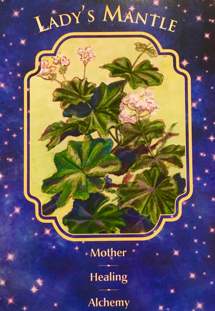 Lady's Mantle, from the Angel Dreams Oracle Card deck, by Doreen Virtue Ph.D and Melissa Virtue