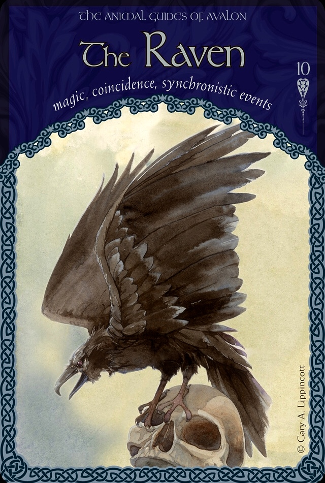 The Raven, from the Wisdom Of Avalon Oracle Card deck, by Colette Baron-Reid