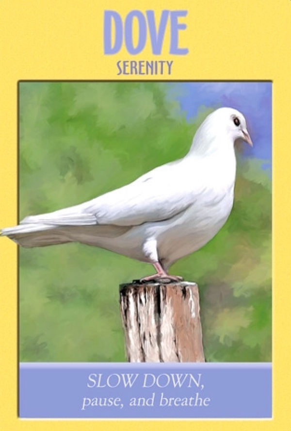 Dove, from the Power Animal Oracle Card deck, by Stephen D Farmer