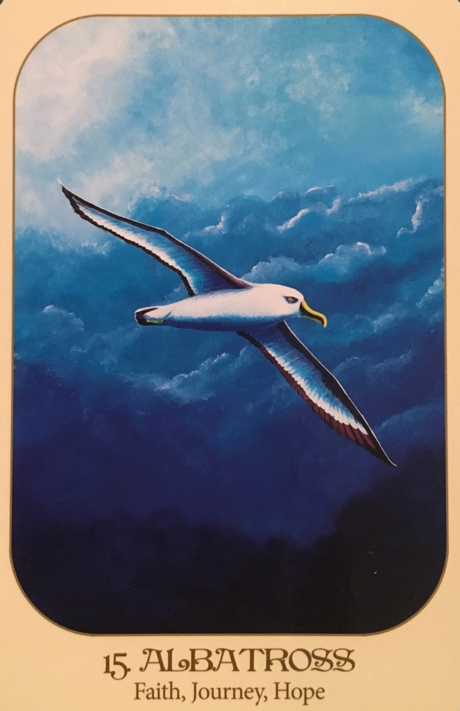 Albatross, from the Animal Voices Oracle Card deck, by Chip Richards